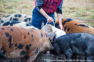 Pigs-03:13 Newsletter